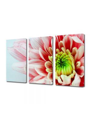 Set Tablouri Multicanvas 3 Piese Flori Floare alb cu rosu