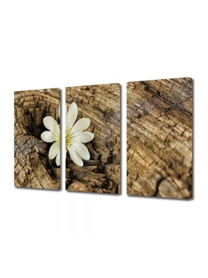 Set Tablouri Multicanvas 3 Piese Flori Vointa si putere