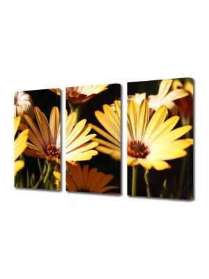 Set Tablouri Multicanvas 3 Piese Flori Galbenele