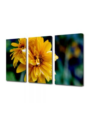 Set Tablouri Multicanvas 3 Piese Flori Dupa amiaza de vara