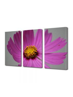 Set Tablouri Multicanvas 3 Piese Flori Floare Cosmo