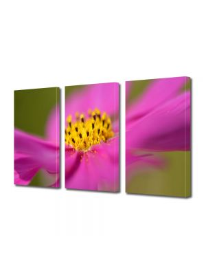Set Tablouri Multicanvas 3 Piese Flori Floricica Cosmo