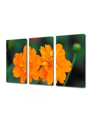 Set Tablouri Multicanvas 3 Piese Flori Flori cu tente portocalii