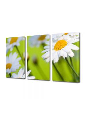 Set Tablouri Multicanvas 3 Piese Flori Margarete