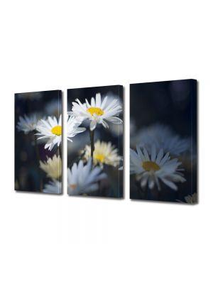 Set Tablouri Multicanvas 3 Piese Flori Margarete in umbra