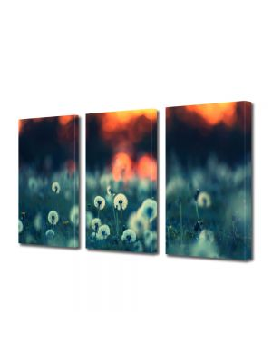 Set Tablouri Multicanvas 3 Piese Flori Papadii la apus