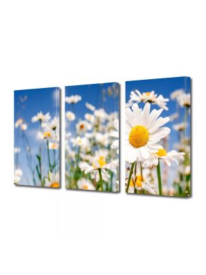 Set Tablouri Multicanvas 3 Piese Flori Musetel