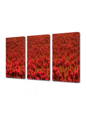 Set Tablouri Multicanvas 3 Piese Flori Lalele rosii Scarlet