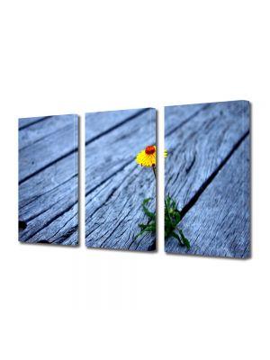 Set Tablouri Multicanvas 3 Piese Flori Putere