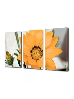 Set Tablouri Multicanvas 3 Piese Flori Floare inflorita