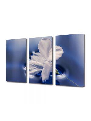 Set Tablouri Multicanvas 3 Piese Flori Floare plutind pe apa