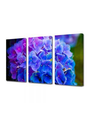 Set Tablouri Multicanvas 3 Piese Flori Floricele albastre
