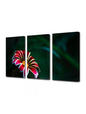 Set Tablouri Multicanvas 3 Piese Flori Floare cu petale rosii