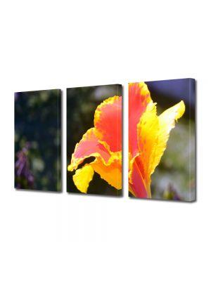Set Tablouri Multicanvas 3 Piese Flori Combinatie de culori aparte