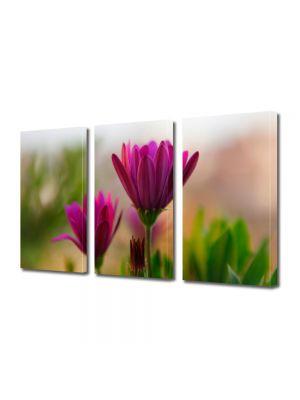 Set Tablouri Multicanvas 3 Piese Flori Cateva flori