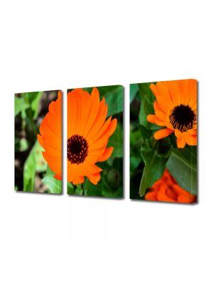 Set Tablouri Multicanvas 3 Piese Flori Flori portocalii