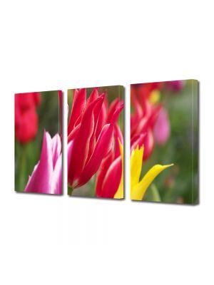 Set Tablouri Multicanvas 3 Piese Flori Flori colorate