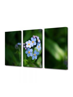 Set Tablouri Multicanvas 3 Piese Flori Floare Nu ma uita