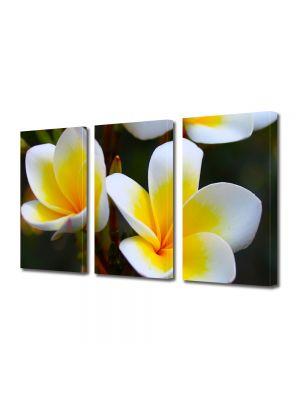 Set Tablouri Multicanvas 3 Piese Flori Flori Frangipani