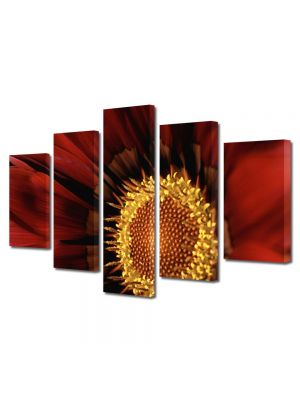 Set Tablouri Multicanvas 5 Piese Flori Floare Gazania