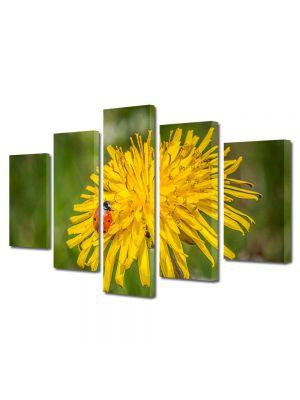 Set Tablouri Multicanvas 5 Piese Flori Buburuza pe floare de papadie