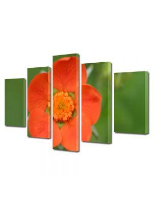 Set Tablouri Multicanvas 5 Piese Flori O floare portocalie