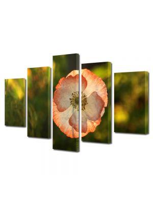 Set Tablouri Multicanvas 5 Piese Flori Floare de mac inflorita