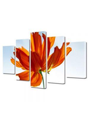 Set Tablouri Multicanvas 5 Piese Flori Floare in lumina soarelui