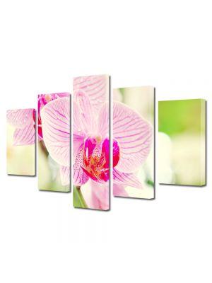 Set Tablouri Multicanvas 5 Piese Flori Orhidee luminoasa