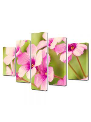 Set Tablouri Multicanvas 5 Piese Flori Petale de flori roz