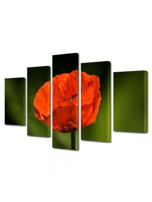 Set Tablouri Multicanvas 5 Piese Flori Floare de mac