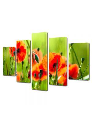 Set Tablouri Multicanvas 5 Piese Flori Maci frumosi