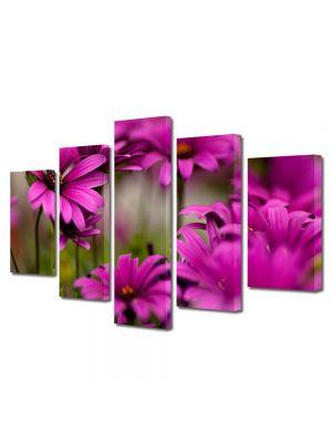 Set Tablouri Multicanvas 5 Piese Flori Margarete roz