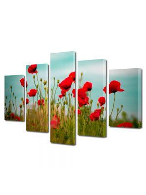 Set Tablouri Multicanvas 5 Piese Flori Maci rosii