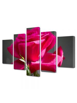 Set Tablouri Multicanvas 5 Piese Flori Trandafir rosu gingas
