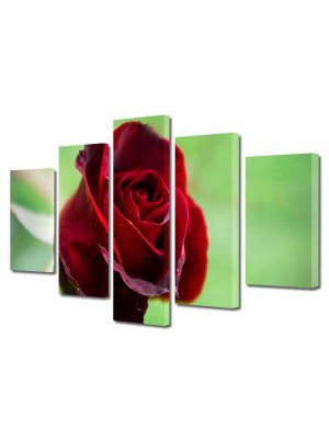 Set Tablouri Multicanvas 5 Piese Flori Fir rosu de trandafir
