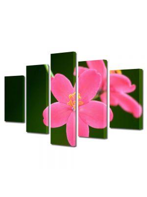 Set Tablouri Multicanvas 5 Piese Flori Flori Jatropha