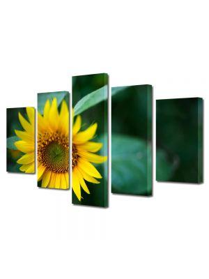 Set Tablouri Multicanvas 5 Piese Flori Pui de floricica soarelui