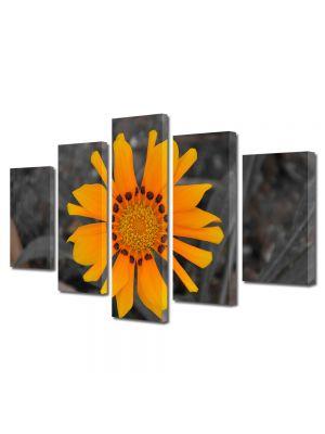 Set Tablouri Multicanvas 5 Piese Flori Floare a soarelui