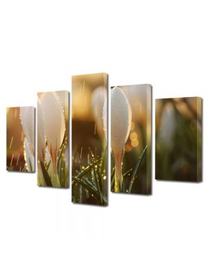 Set Tablouri Multicanvas 5 Piese Flori Muguri de flori