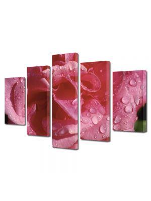 Set Tablouri Multicanvas 5 Piese Flori Floare dupa averse