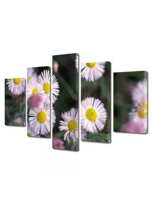 Set Tablouri Multicanvas 5 Piese Flori Flori de vara