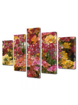 Set Tablouri Multicanvas 5 Piese Flori Aglomeratie de flori