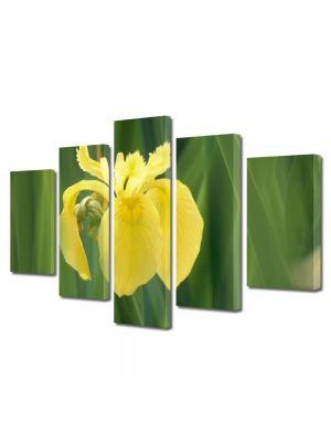 Set Tablouri Multicanvas 5 Piese Flori Galben