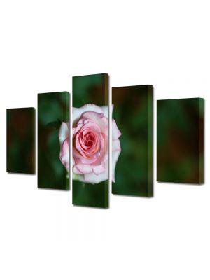 Set Tablouri Multicanvas 5 Piese Flori Fir de Trandafir Violet