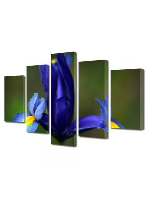 Set Tablouri Multicanvas 5 Piese Flori Iris albastru