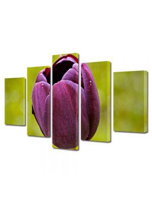 Set Tablouri Multicanvas 5 Piese Flori O lalea
