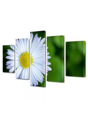 Set Tablouri Multicanvas 5 Piese Flori Floare curioasa