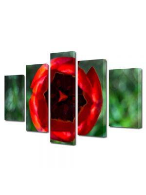 Set Tablouri Multicanvas 5 Piese Flori Lalea deschisa