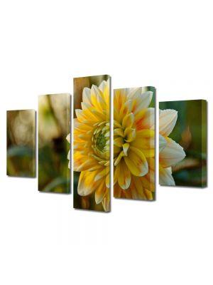 Set Tablouri Multicanvas 5 Piese Flori Floare dupa ploaie